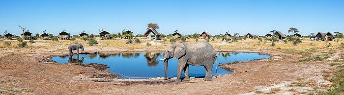 700px-Elefantes_africanos_de_sabana_(Loxodonta_africana),_Elephan